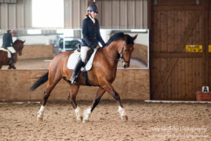 Mill Lane Stables Winter Dressage Point Series Championship
