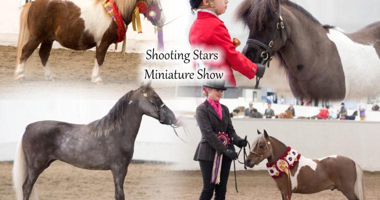 Shooting Stars Miniature Horse and Shetland Show