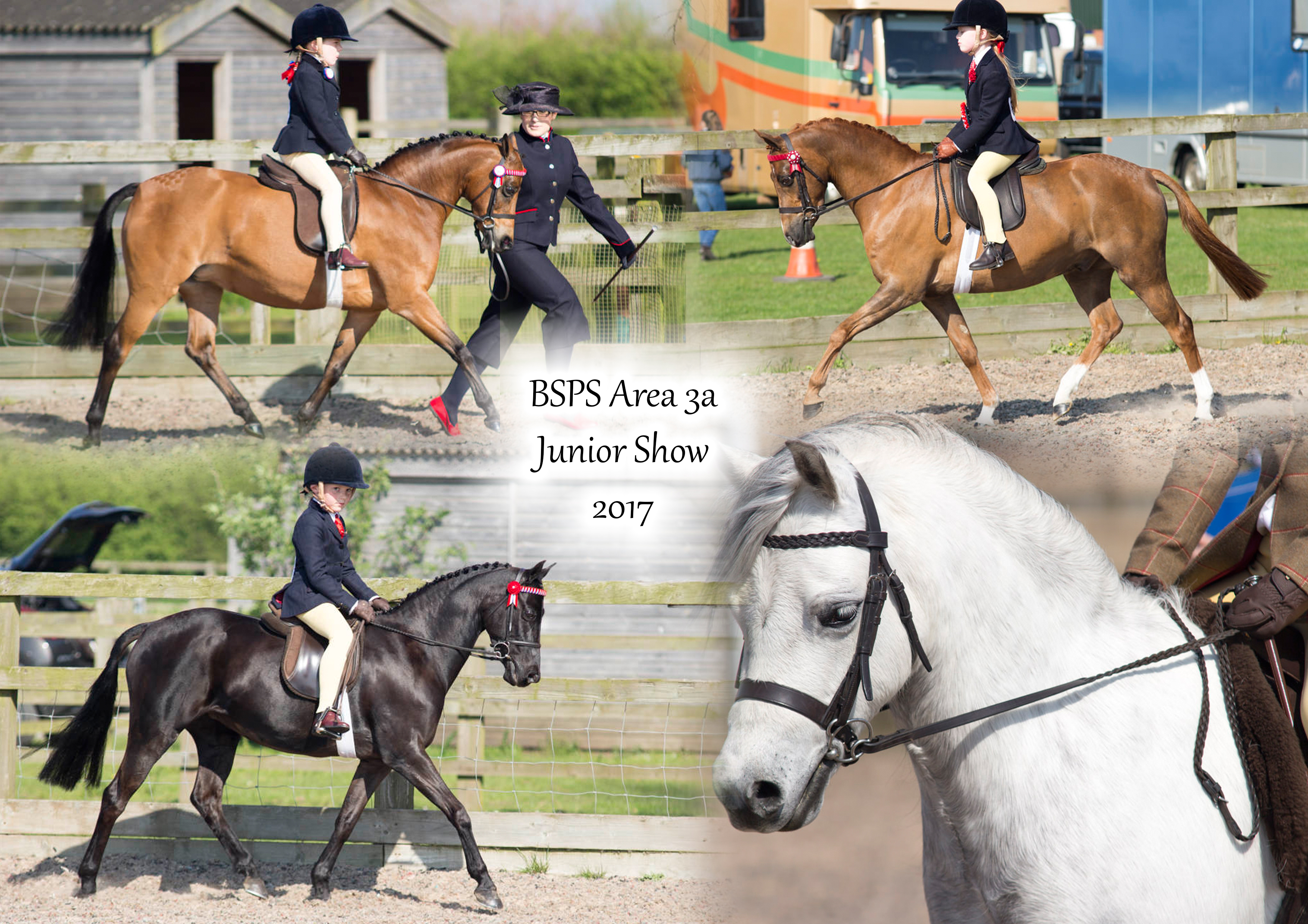 BSPS Area 3a Junior Show 2017