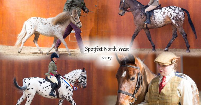 Spotfest North West- British Spotted Pony Society