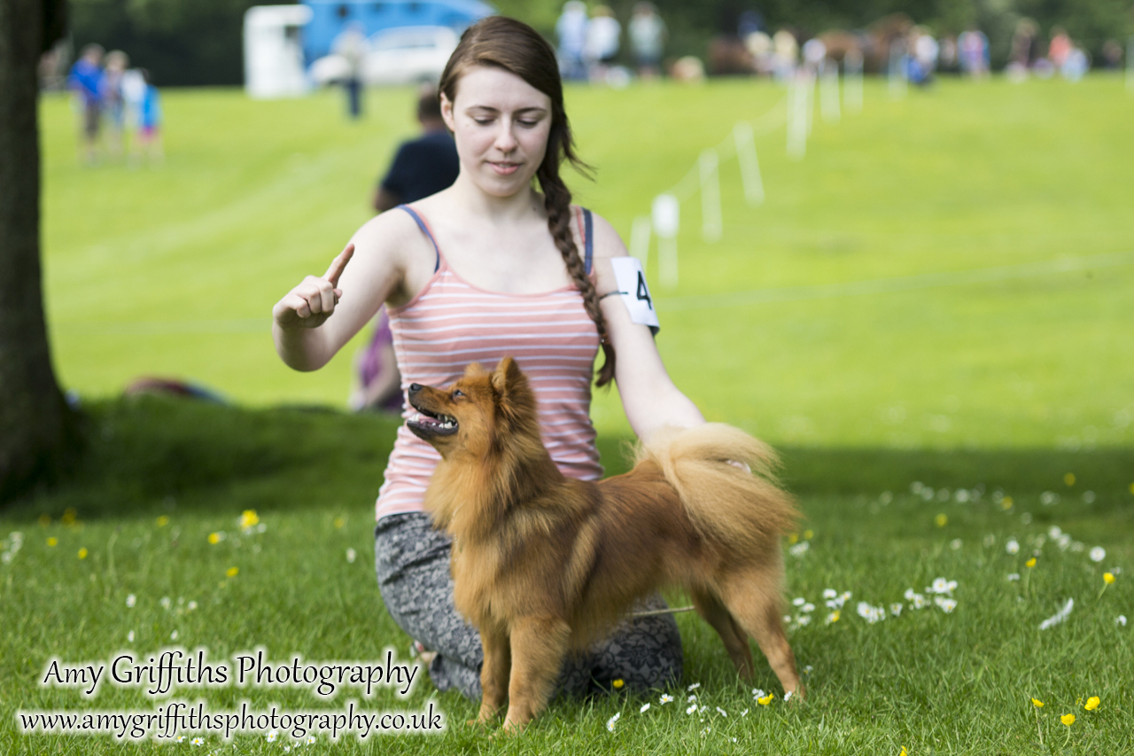 Hornsea Horse and Dog Show Day 1- Amy Griffiths Photography