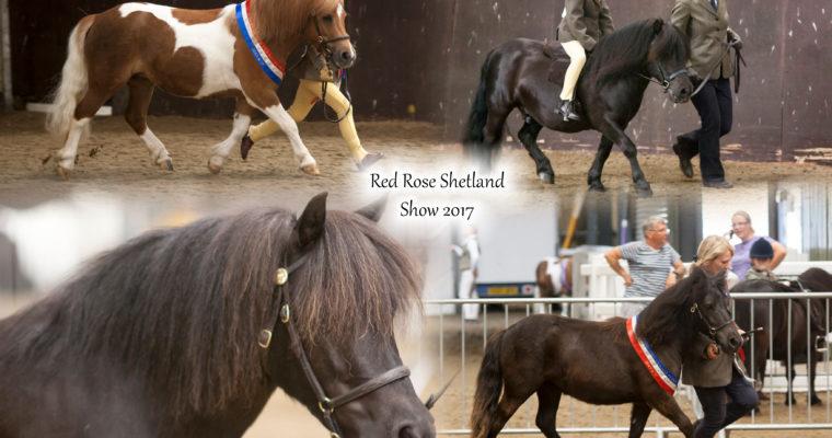 Red Rose Shetland Show 2017