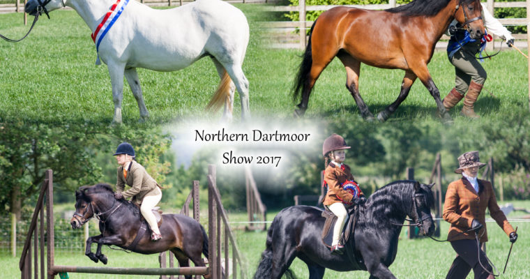 The Northern Dartmoor Pony Show