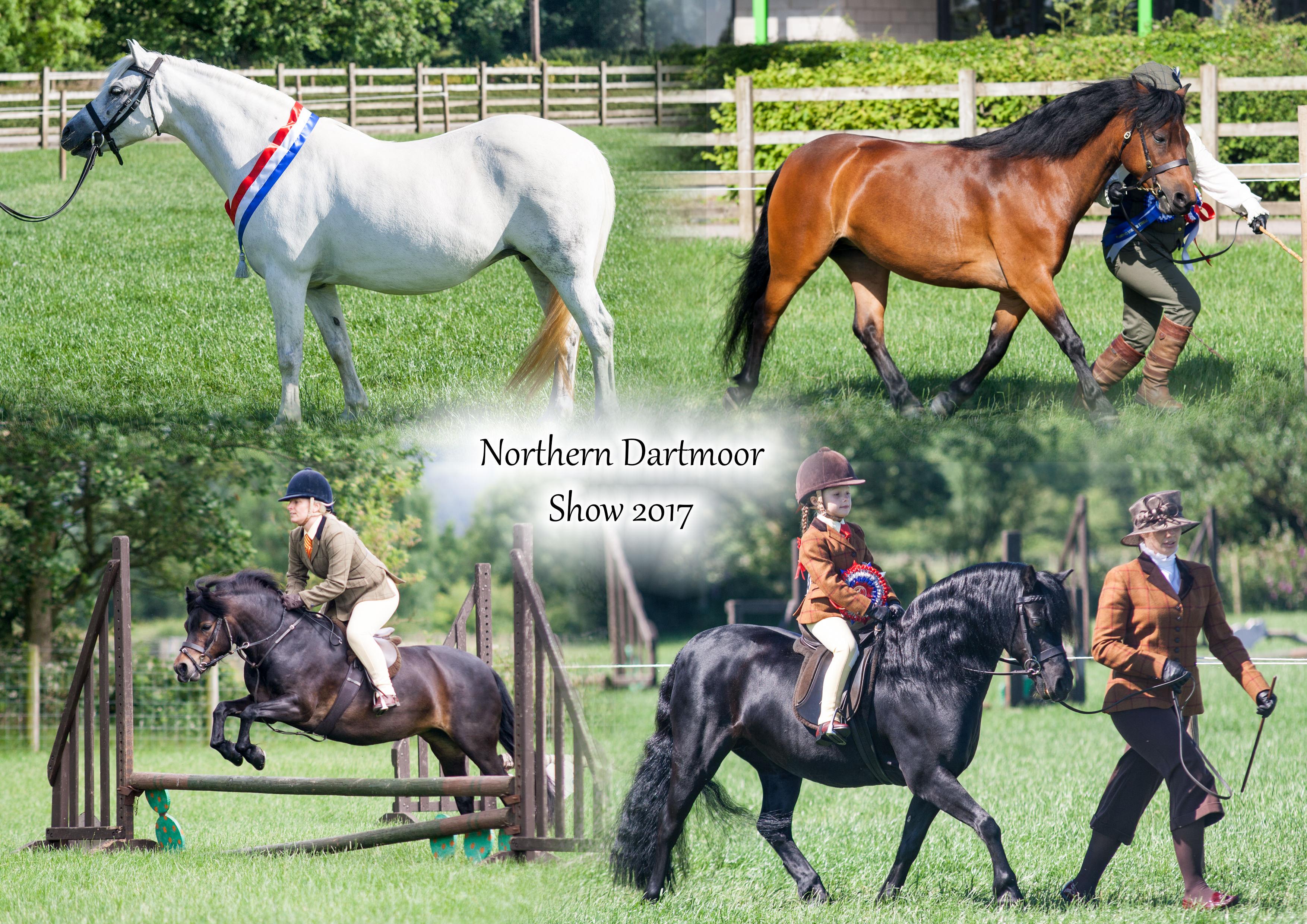 The Northern Dartmoor Pony Show