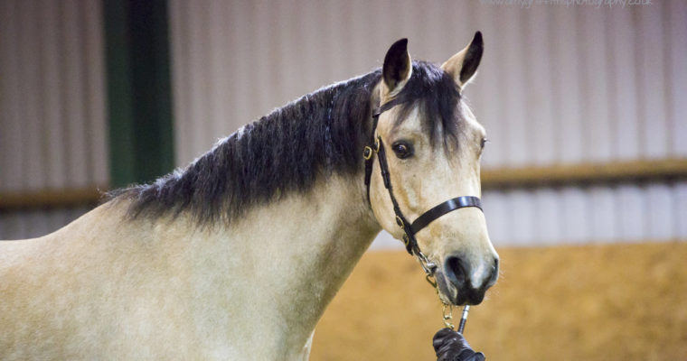 Patrington Mill Winter Shows at Milton Equestrian Centre- 15th October 2017