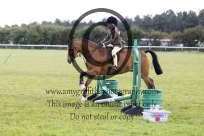 Cradle Stakes Working Hunter