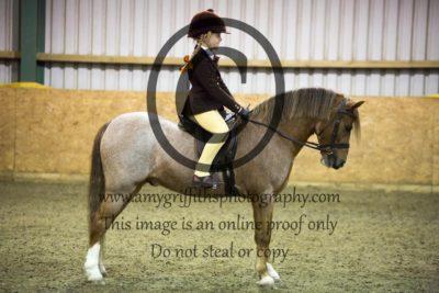 Class 14- Novice Pony