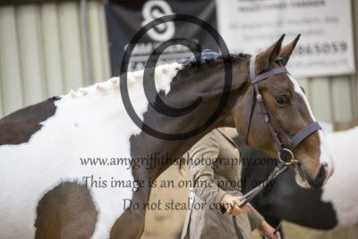Class 4- Inhand Horse