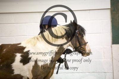 Class 3: Inhand Pony