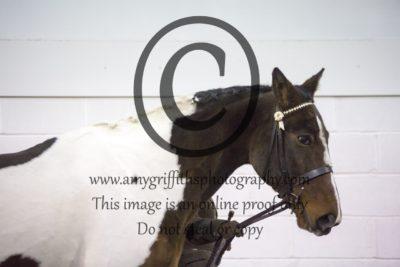 Class 4: Inhand Horse