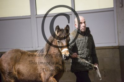 Class 1a: M&M Foal