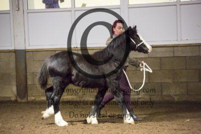 Class 1b: Welsh Foal