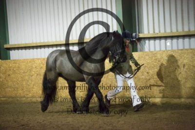 Class 8: Gelding/Stallions