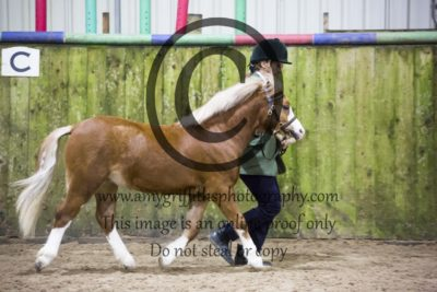 Class 6- In Hand Pony