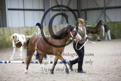 Class 7- Youngstock 2&3 Year Olds