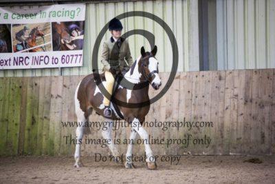 Class 25: Gelding & Stallion
