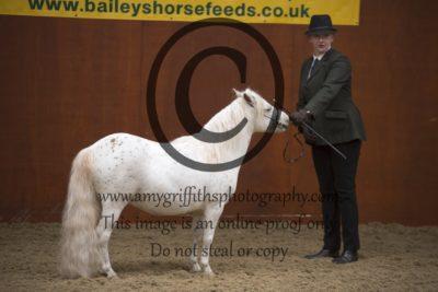 Class 6: BSpPS Stallion