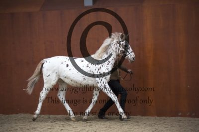 Class 7: Registered Spotted Horse Youngstock