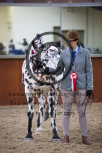 Registered Spotted Horse Championship