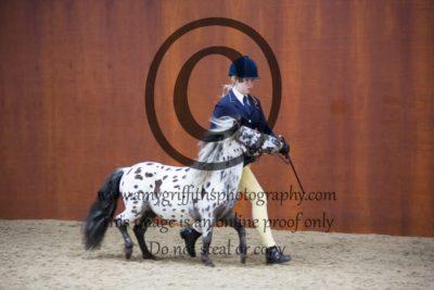 Class 12: Open Stallion