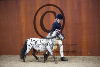 Open Spotted Pony Championship