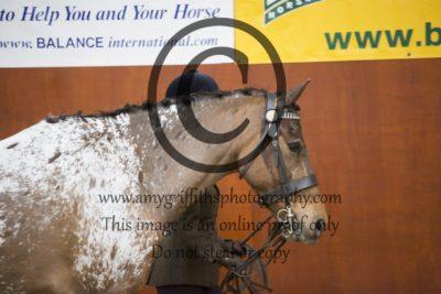 Class 14: Open Horse Mare & Gelding