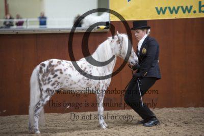 Class 21: Open Mare, Gelding & Stallion