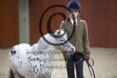 Class 29: Senior Horse/Pony
