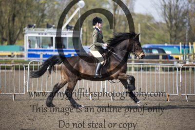 Class 15: Novice Ponies exceeding 143cm