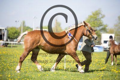 Class 34: Local Horse