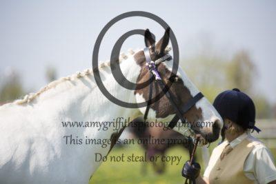 Class 42: Inhand Riding Horse