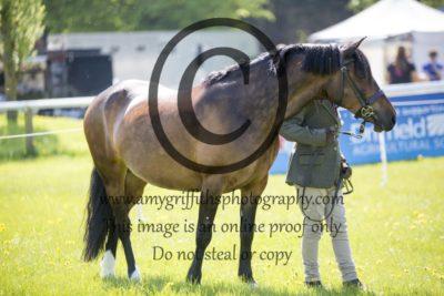 Class 5: Local Pony