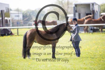 Class 15: Show Hunter Pony