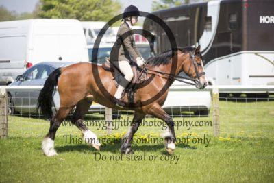 Class 63: Ridden Pony