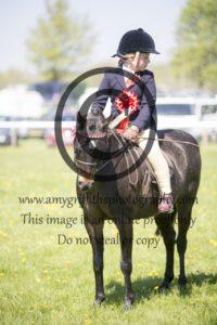 Class 64: Show Pony