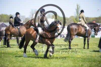 Class 66: Open pony
