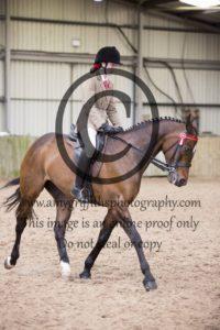 Class 46: Riding Horse