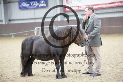 Class 9: Black Stallion