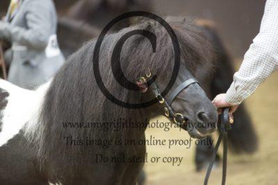 Class 7: Veteran Horse