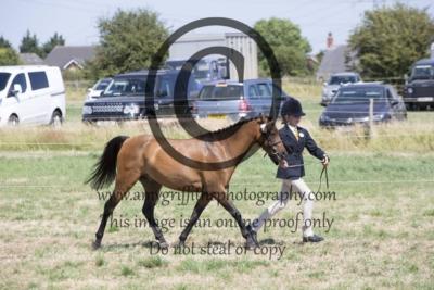 Class 28: Show Pony/Show Hunter Pony