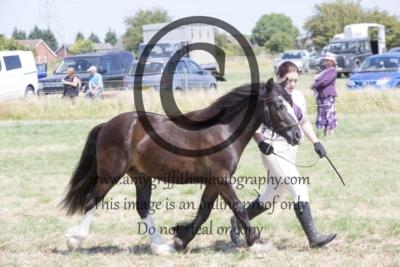Class 25: Gelding or Stallion