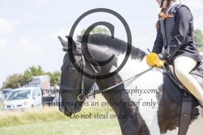 Class 6: Novice Horse