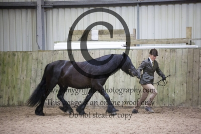 Class 10: NCPA Registered M&M Stallion, Mare or Gelding
