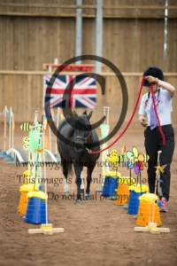 Class 8: Open Halter Obstacle