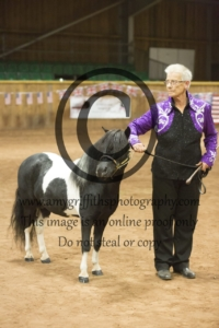 Grand Champion Scaled Down Show Horse of 2018