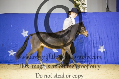 Class 28: Scaled Down Show Hack Mare Filly & Gelding