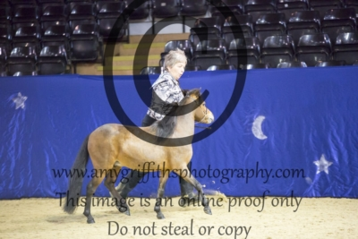 Class 29: Scaled Down Show Hack Colt or Stallion
