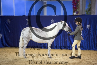 Class 30: Scaled Down Riding Horse Filly Mare & Gelding