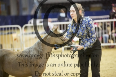 Youth Handler Championship