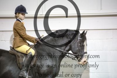 Class 24: Gelding/Stallion